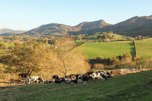 Prairie de nos vache