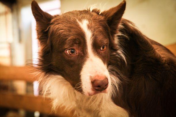 Notre chien Lagun